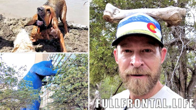 Bloodhound in a Lake | Colorado Hiking | Downtown Denver - FullFrontal.Life